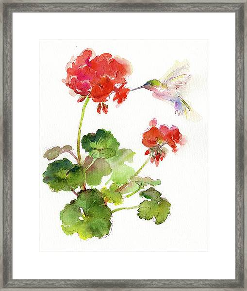 Hummingbird With Geranium Framed Print