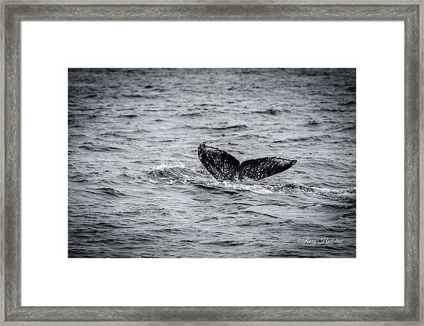 Humpback Whale Tail Framed Print