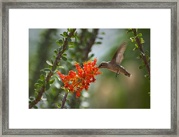 Hums With Its Mouth Full Framed Print