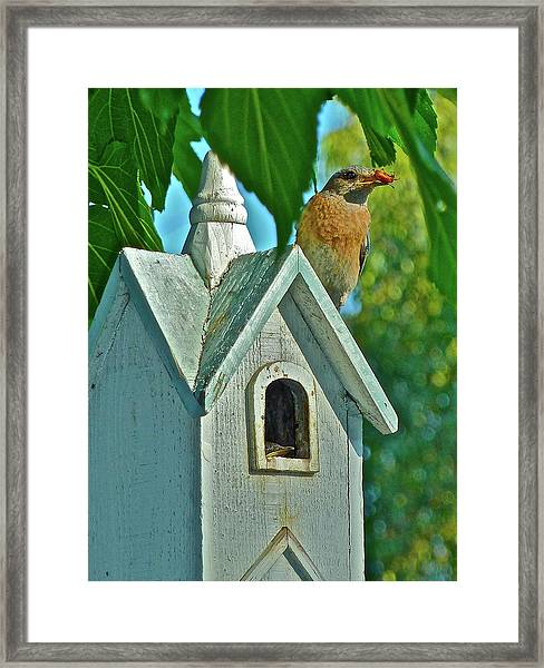 Hungry Baby Framed Print