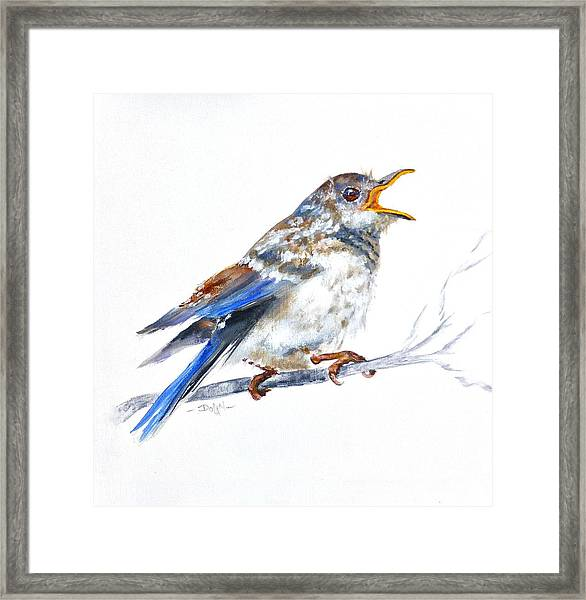 Hungry Fledgling Blue Bird Framed Print