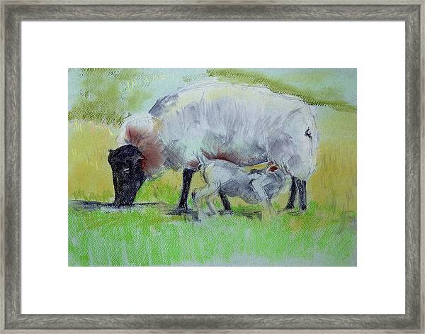 Hungry Lamb Framed Print