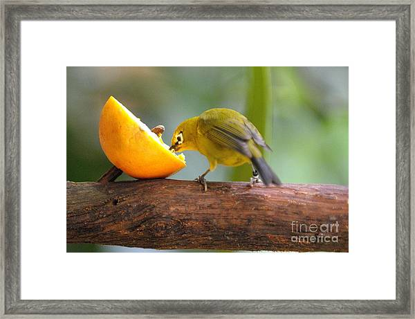Hungry... Framed Print by Miguel Celis
