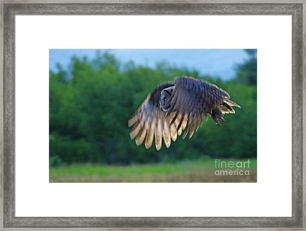 Hunter On Silent Wings Framed Print