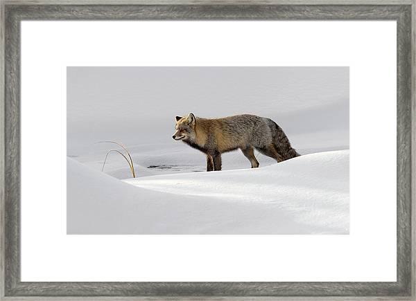 Hunting For Breakfast Framed Print