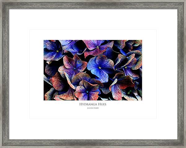 Hydranga Hues Framed Print