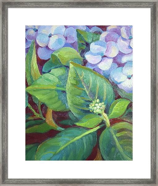 Hydrangea For Valentine 2011 Framed Print