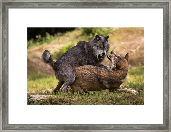 I Am The Boss Framed Print by Sebastian Graf