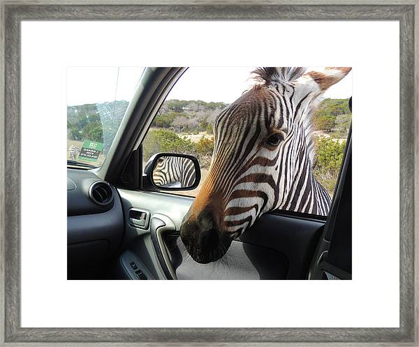 I Brake For Wildlife Framed Print