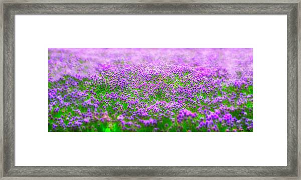 Framed Print featuring the photograph I Dream by Dee Browning