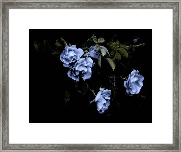 I Dream Of Roses Framed Print