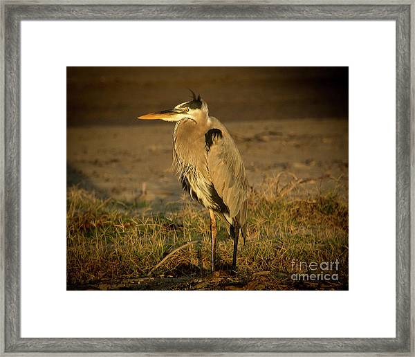 I Know They Are Coming Wildlife Art By Kaylyn Franks Framed Print