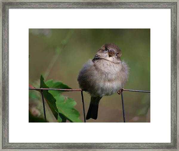 I Know You From Somewhere Framed Print