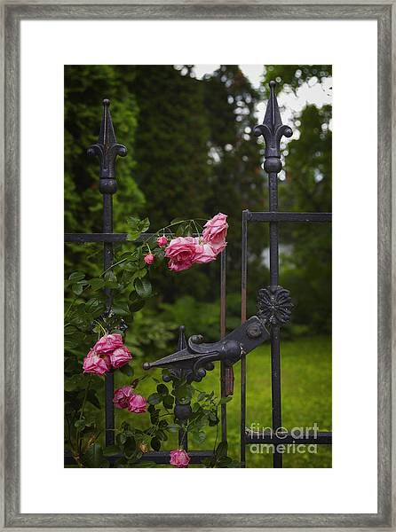 I Never Promised You A Rose Garden Framed Print
