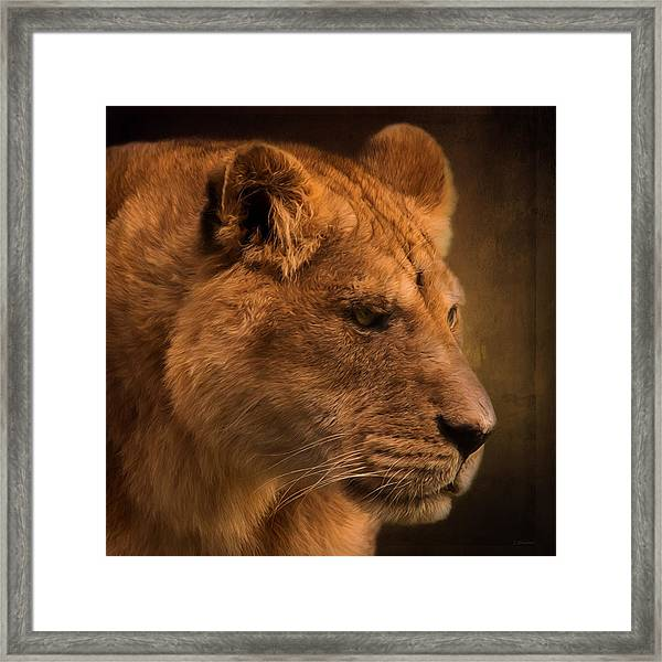 I Promise - Lion Art Framed Print