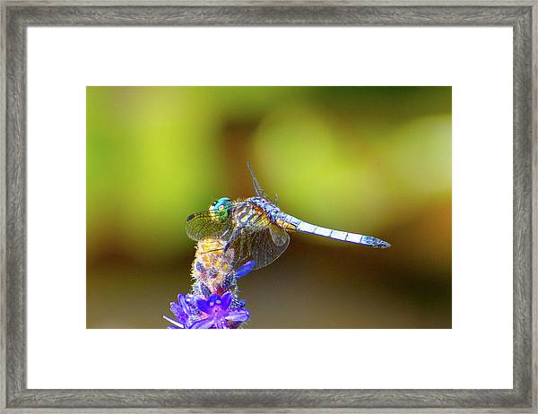 I See You, Dragonfly Framed Print