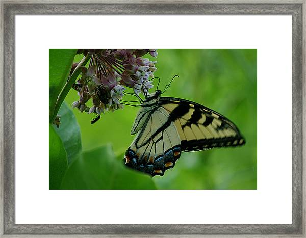 I Want To Be A Butterfly Framed Print