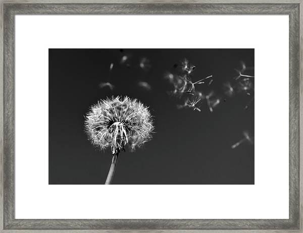 I Wish I May I Wish I Might Love You Framed Print