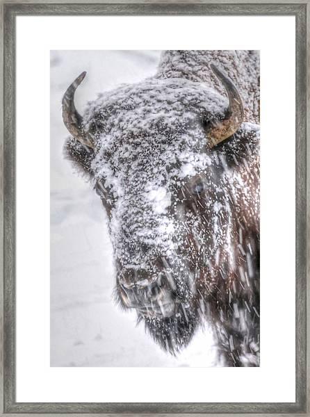 Ice Faced Framed Print