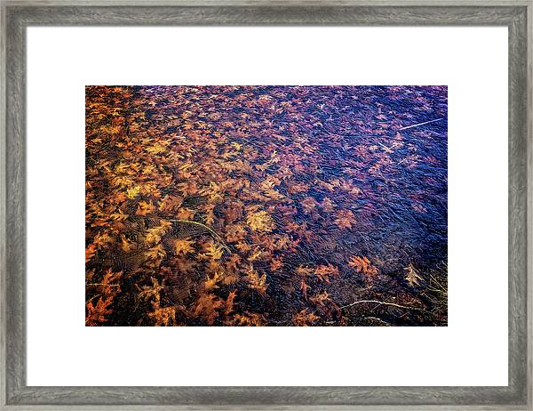 Ice On Oak Leaves Framed Print