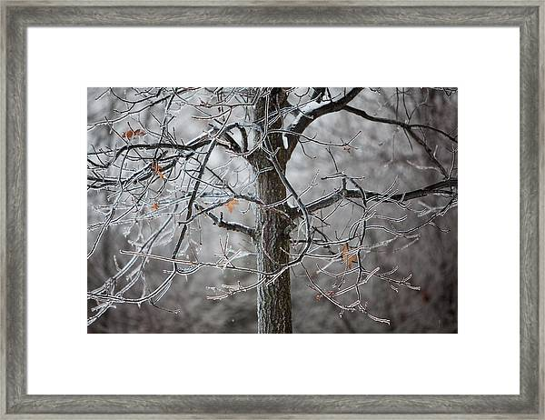 Ice Tree Framed Print