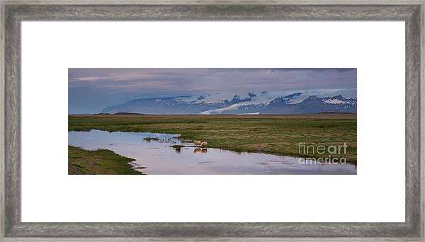Iceland Sheep Reflections Panorama  Framed Print