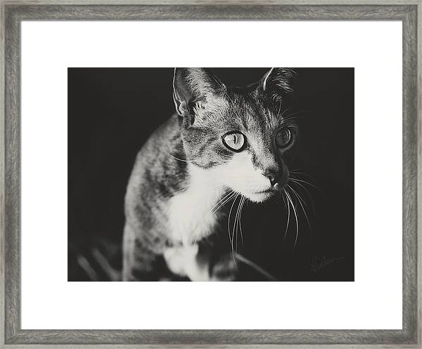 Ickis The Cat Framed Print