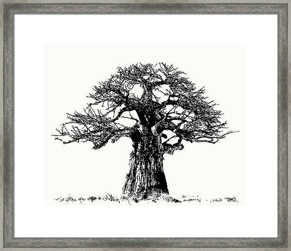 Iconic Baobab Tree In Black And White Framed Print