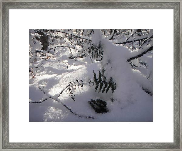 Icy Fern Framed Print