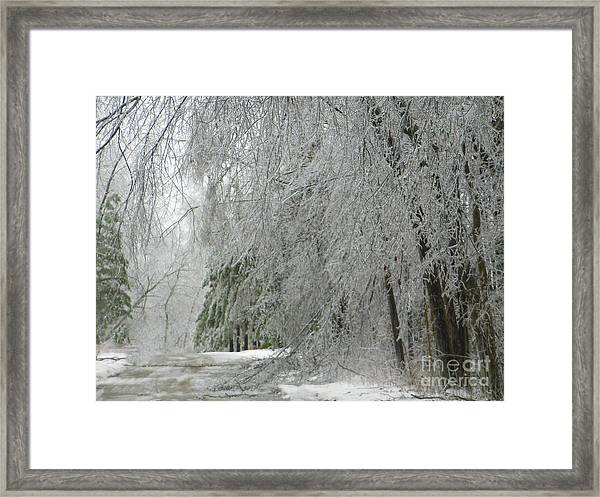 Icy Street Trees Framed Print