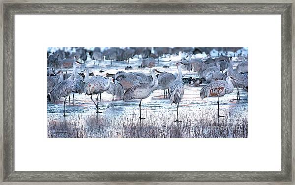 Icy Stroll Framed Print