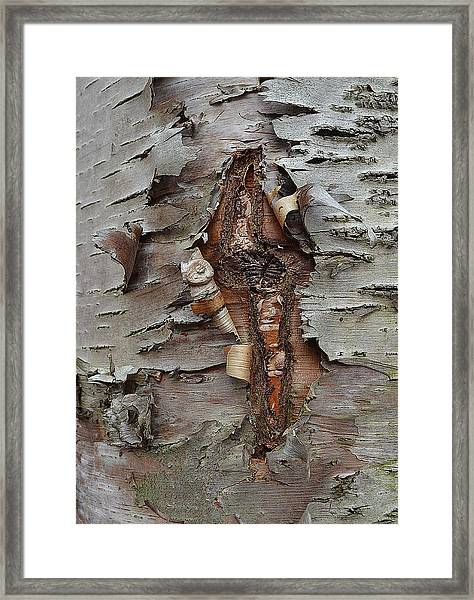 Idiosynchratic Process Framed Print