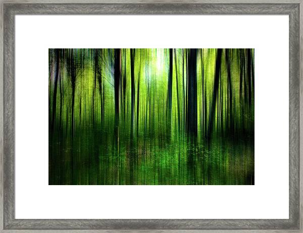 If A Tree Framed Print
