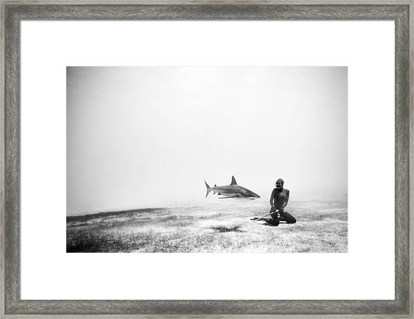 If Sharks Could Fly Framed Print by One ocean One breath