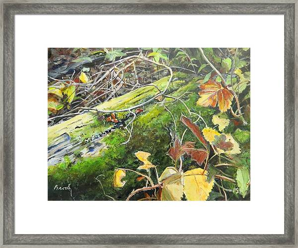 If There Were Fairies Framed Print