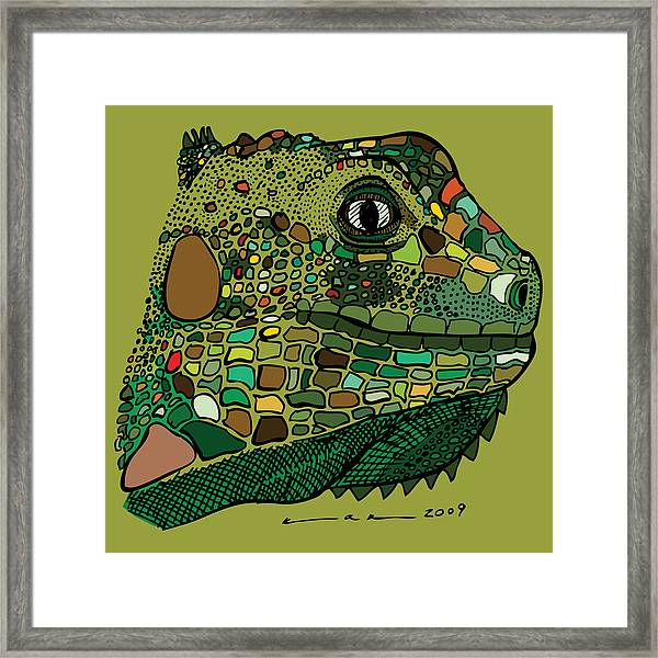 Iguana - Color Framed Print by Karl Addison