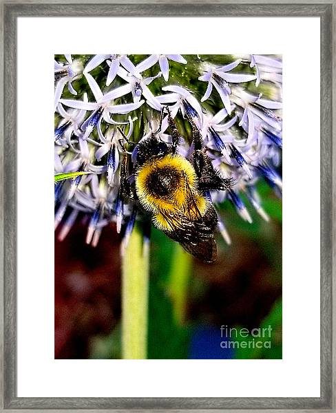 I'll Bee Back Framed Print