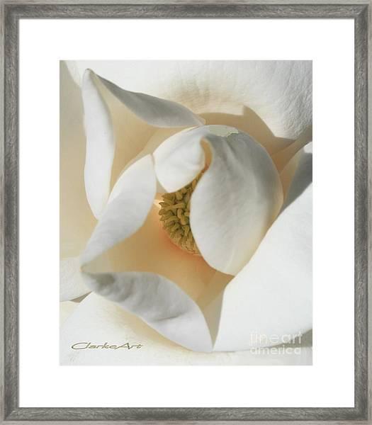 Illuminated Magnolia Macro Framed Print