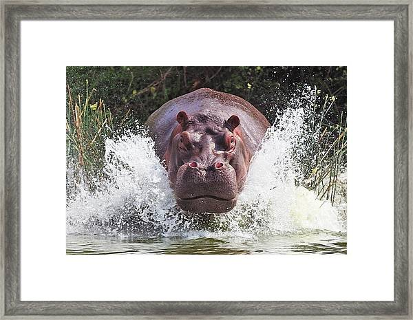 I'm Going To Get You !! Framed Print