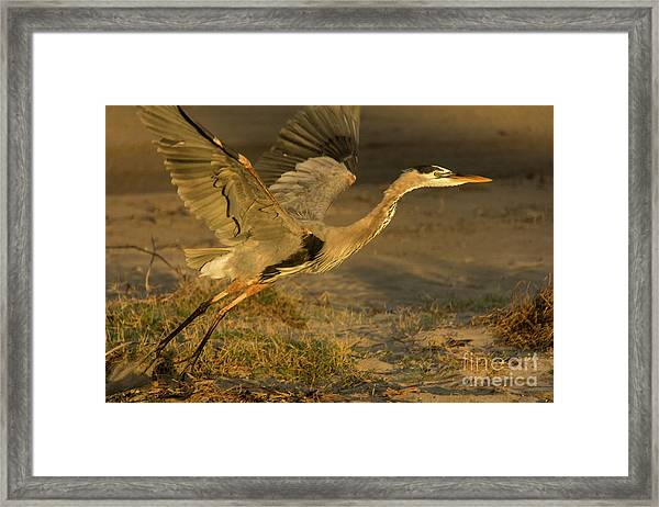 I'm Out Of Here Wildlife Art By Kaylyn Franks Framed Print