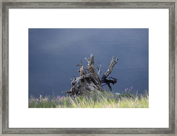 Stump Chambers Lake Hwy 14 Co Framed Print