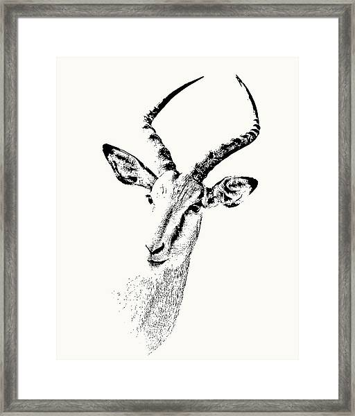 Impala Antelope Portrait Framed Print