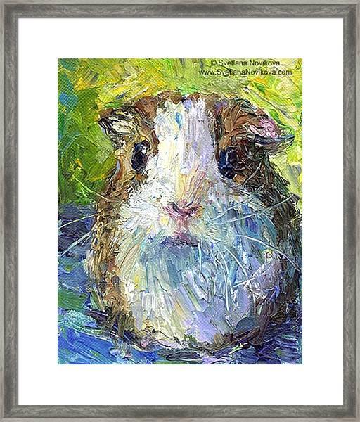 Impasto Impressionistic  Guinea Pig Art Framed Print