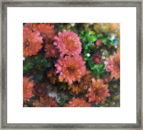 Bronze And Pink Mums Framed Print