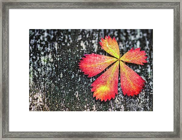 Impressions Of Autumn Framed Print