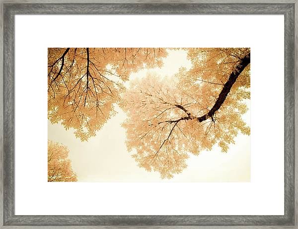 Framed Print featuring the photograph Impressions Of October by John De Bord