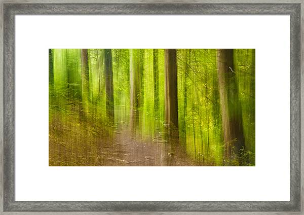 Impressions Of The Forest Framed Print