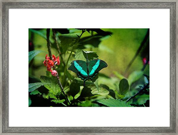 In A Butterfly World Framed Print