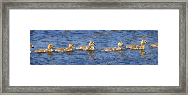In A Row Framed Print