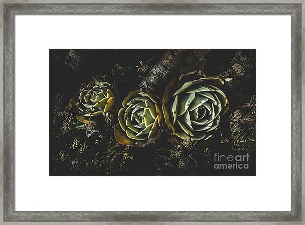 In Dark Bloom Framed Print